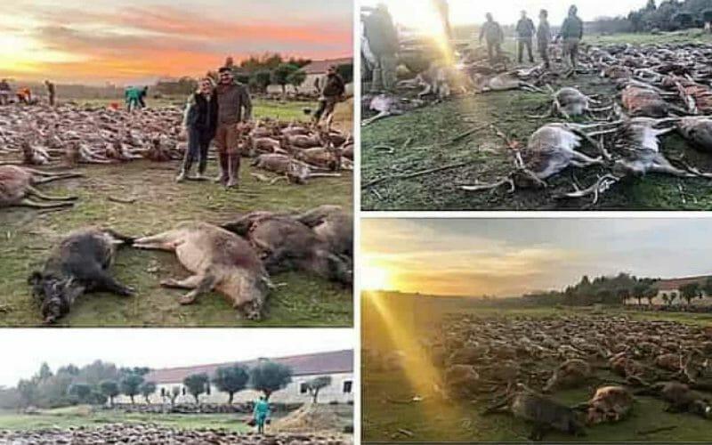 animali uccisi